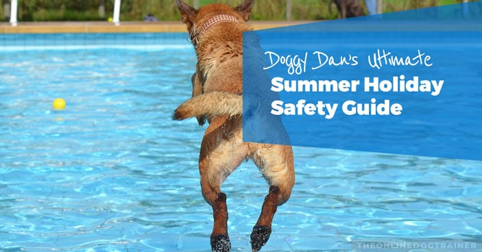 Doggy-Dans-Ultimate-Summer-Holiday-Safety-Guide-HEADLINE-IMAGE