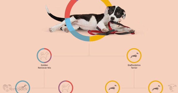 Should-You-Get-a-Doggy-DNA-Test-3-Reasons-One-May-Be-Beneficial-to-You-and-Your-Pup-FEATURED-IMAGE