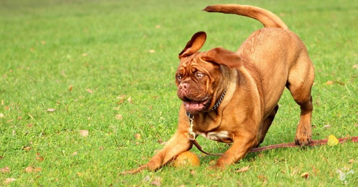 Joint-Care-for-Dogs-How-to-Detect-Discomfort-and-Help-a-Dog-Whos-in-Pain-BLOG-IMAGES-1