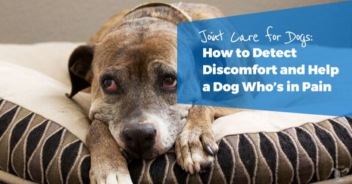 Joint-Care-for-Dogs-How-to-Detect-Discomfort-and-Help-a-Dog-Whos-in-Pain-HEADLINE