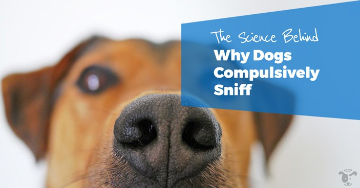 Drugs-Truffles-and-Bums-The-Science-Behind-Why-Dogs-Compulsively-Sniff-HEADLINE
