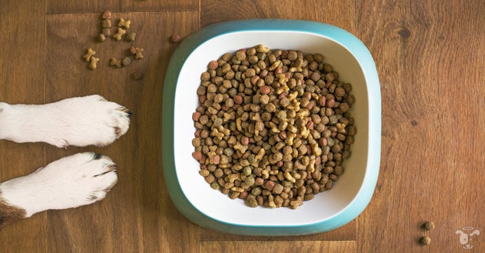 The-Benefits-of-Feeding-Raw-Dog-Food-And-How-to-Make-an-Easy-Switch-BLOG-IMAGES-1