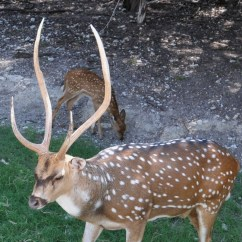 Whitetail Deer Shot Placement Diagram Main Electrical Panel Wiring Axis Pictures To Pin On Pinterest