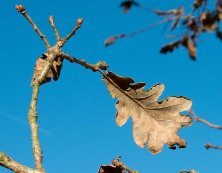 Last year's leaf, next year's buds