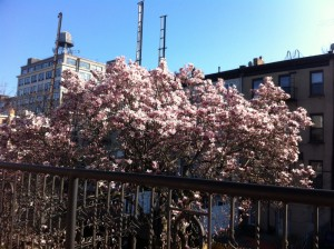 The spring view from John's outdoor office.