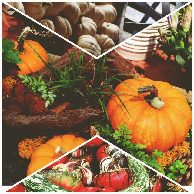 pumpkins fall autumn Halloween