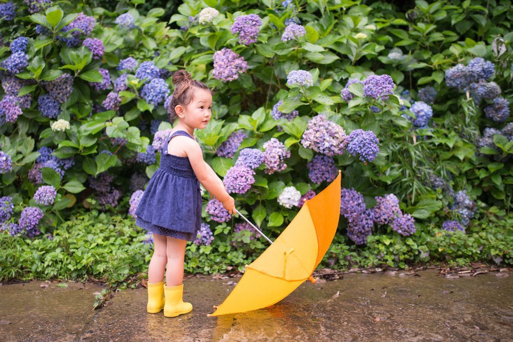 girl-umbrella-hydrangea