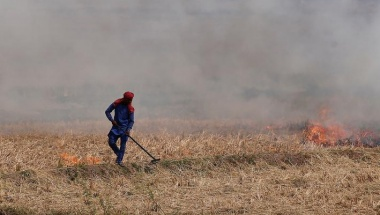 A farmer burns the stubble in a rice field in Zirakpur