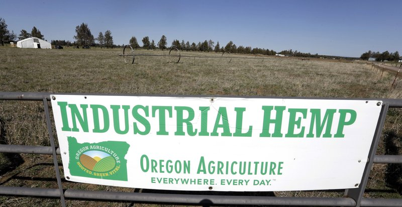 US hemp market set to boom- ASP