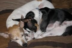Lexie & Tate, Terriers and Teachers