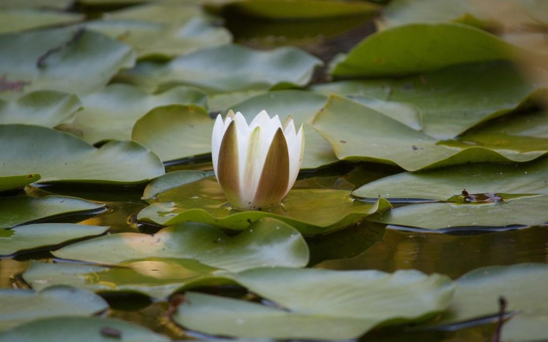 Taoïsme, partie 1, neutralité bienveillante