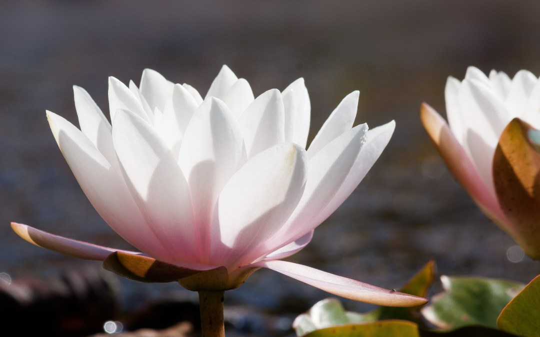 Les trois niveaux de libération, partie 1, libérer Dieu ou la dimension divine en soi