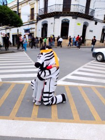 Zebra hugs at a zebra crossing