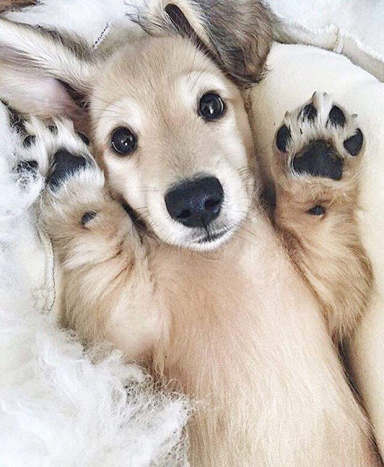 Cute puppy holding paws up