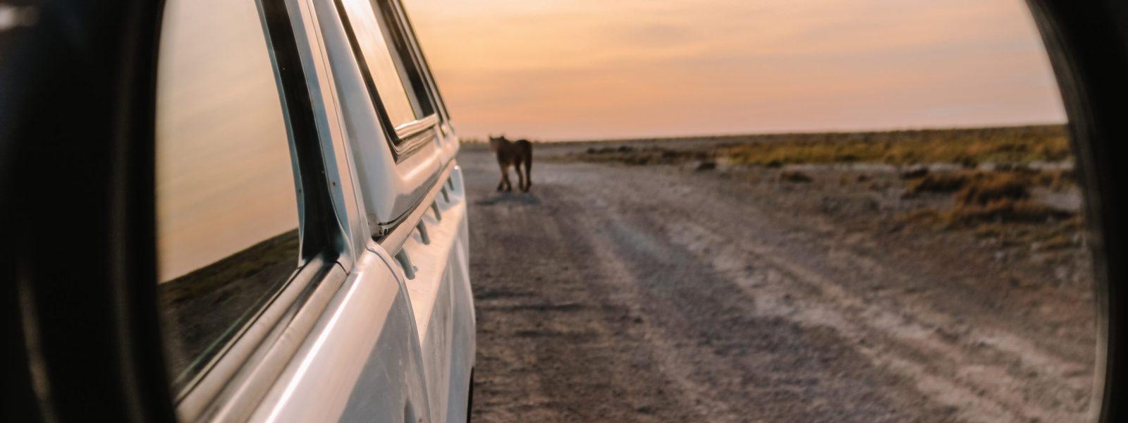 De hoogtepunten van Namibië: de 15 allermooiste plekken