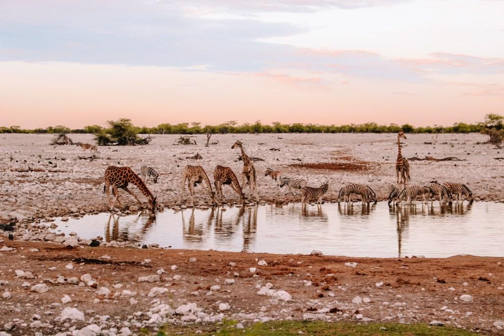 Etosha National Park in Namibia | The Orange Backpack