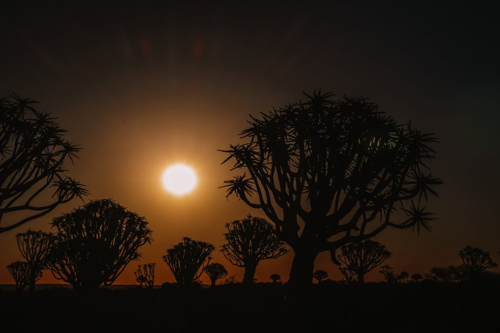 Quiver tree forest | Kokerbomen | Keetmanshoop | The Orange Backpack