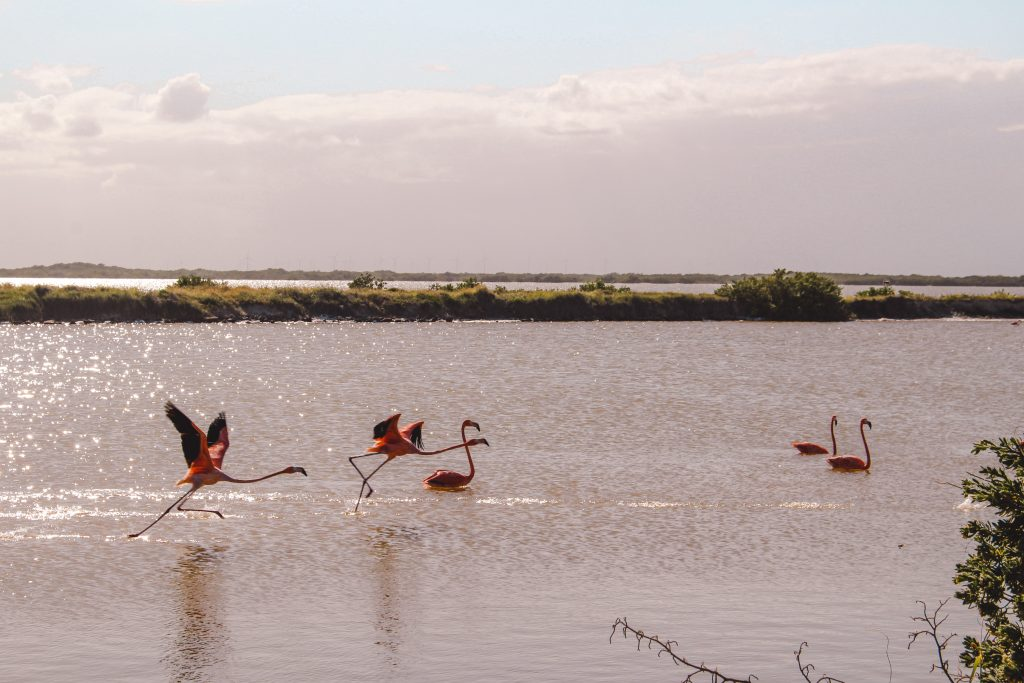 Pink lakes | Pink Lakes Las Colorads | Rio Lagartos Yucutan Mexico | The Orange Backpack