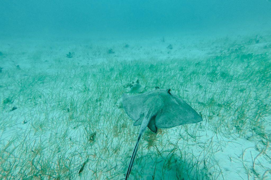 Snorkelen | Snorkling | Belize | Central America | The Orange Backpack