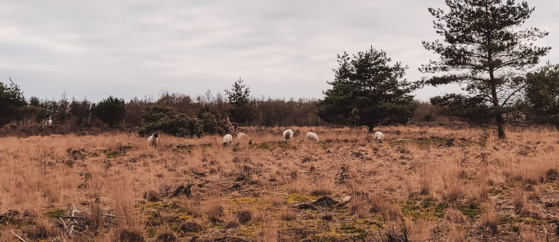 6 reasons for a trip to Drenthe