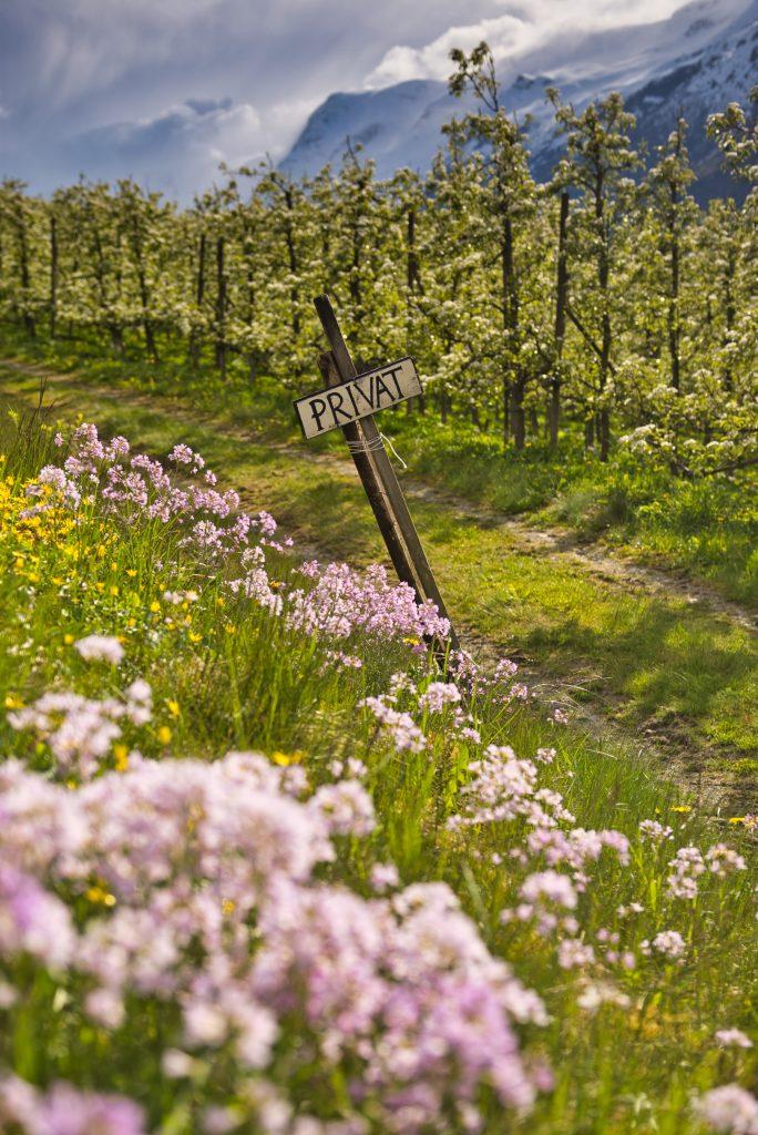 Europa Road Trip Noorwegen fruitboomgaarden Hardanger2_Norway_Realcamplife