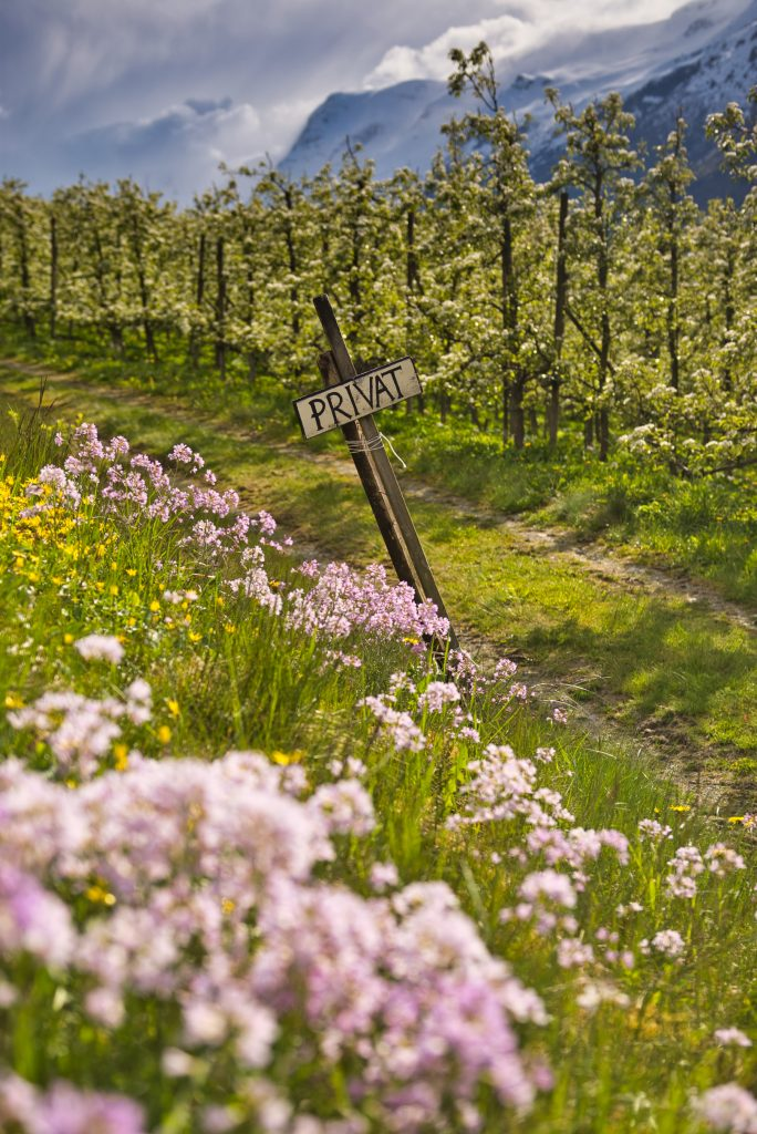 Europe Road Trip Norway fruit orchards Hardanger2_Norway_Realcamplife