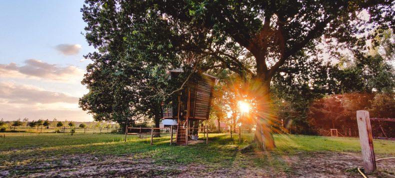 Goldsworthy: tofste boomhut in Nederland