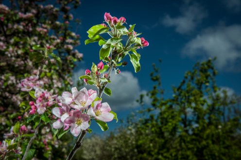 April Blossom, lite 26th April 2017
