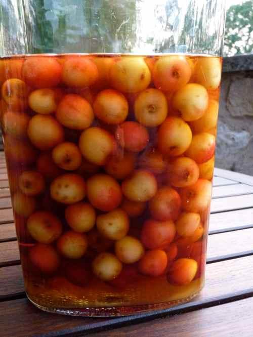 Cherry brandy on day one