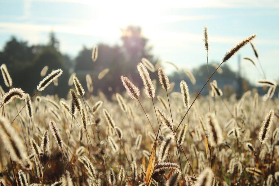 Seasonal Allergies | The Organic Beauty Blog