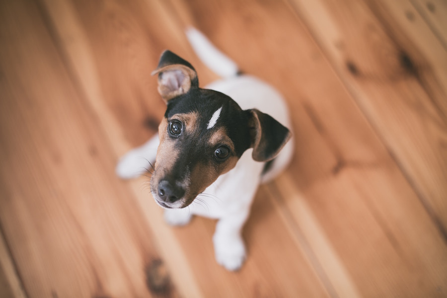 10 Most Dangerous Household Toxins for Pets   The Organic Beauty Blog