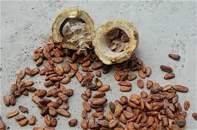 Cacao Nibs: Cacao Health Benefits