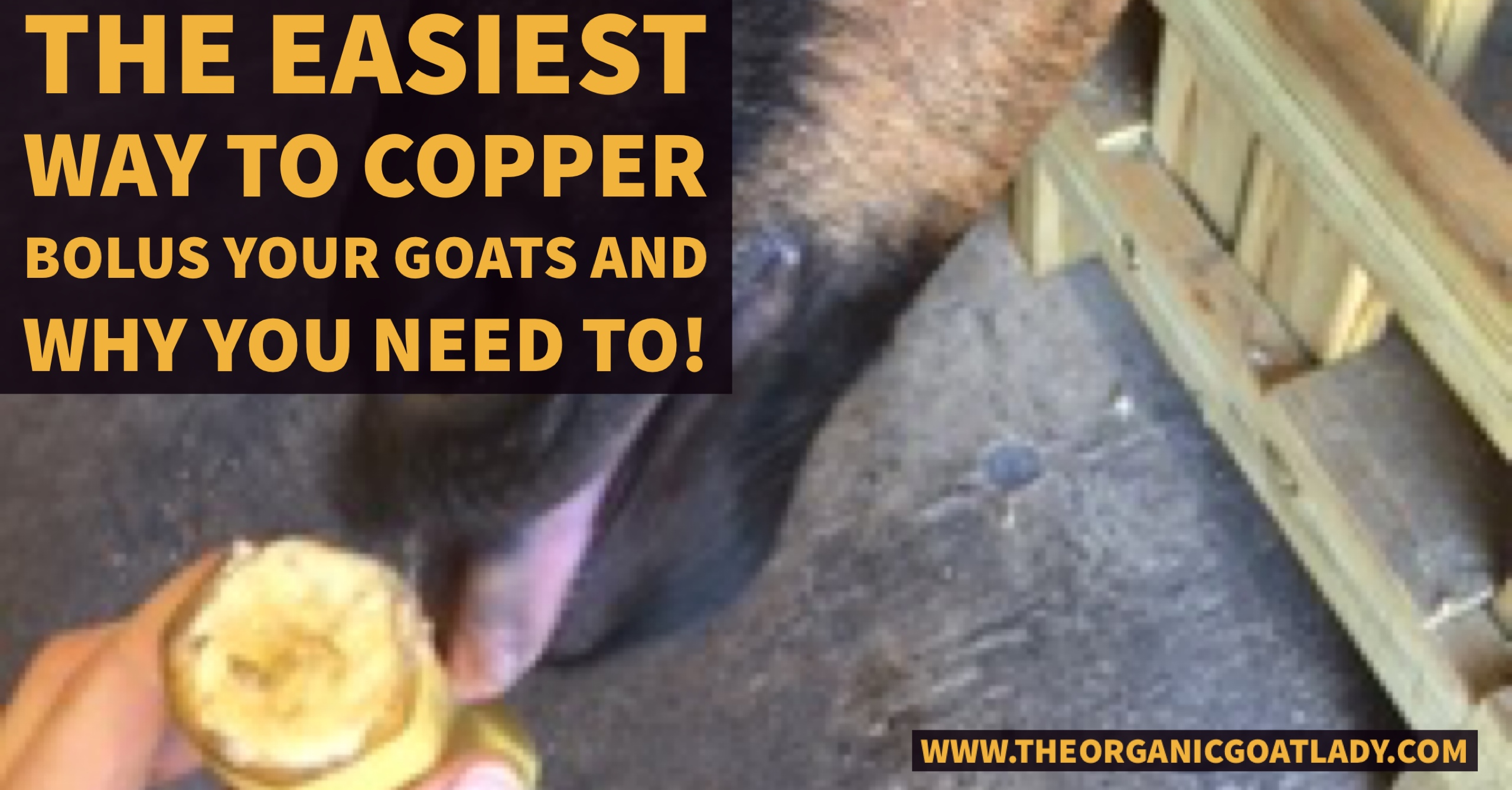The Easiest Way to Copper Bolus Your Goats and Why You NEED To!
