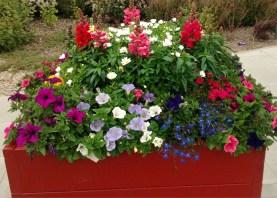 Planted tubs (F Grahame)