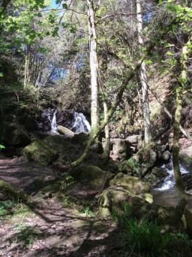 Rosemarkie Fairy Glen woods