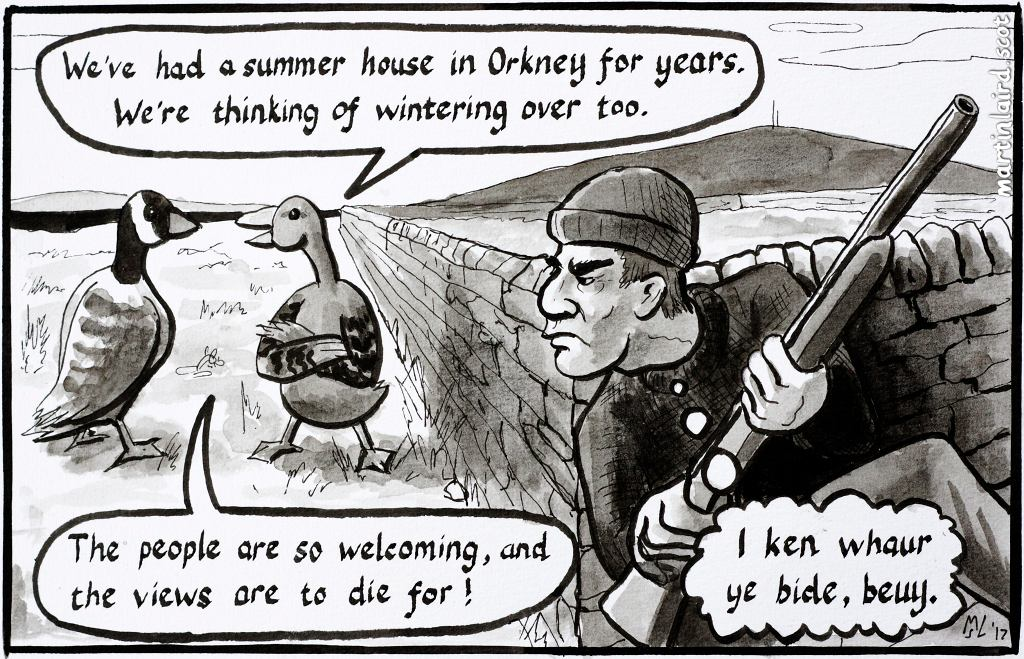 """A pen and ink cartoon of a threatening man with a shotgun listening in on two geese discussing settling in Orkney. """"The views are to die for!"""""""