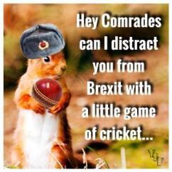 Brexit squirrel