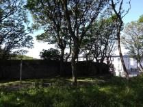 Secret Garden Wall