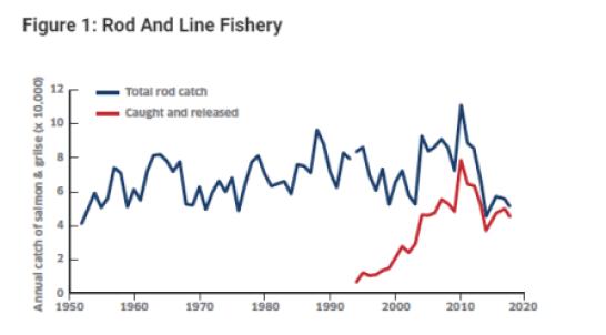 rod and line salmon