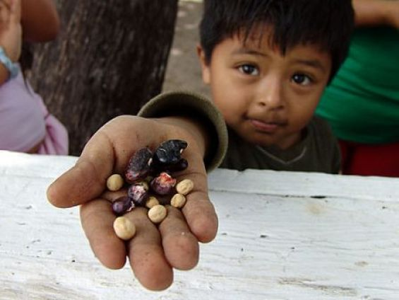 boy with seeds