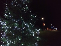 Christmas tree Finstown