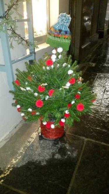 Christmas tree - tree shop