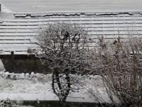 birds sheltering jan 29 2019