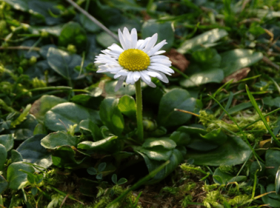 daisy Mike Bell