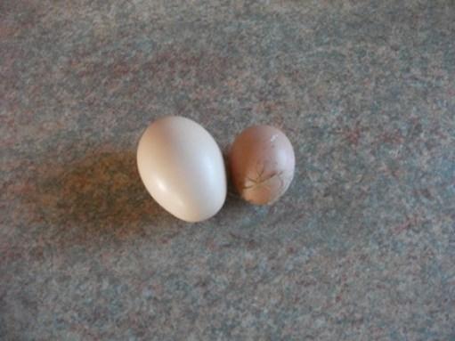 eggs Bell