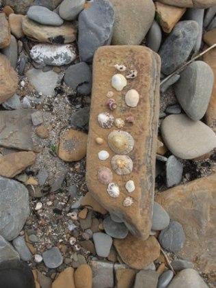 Marwick Bay shells Bell