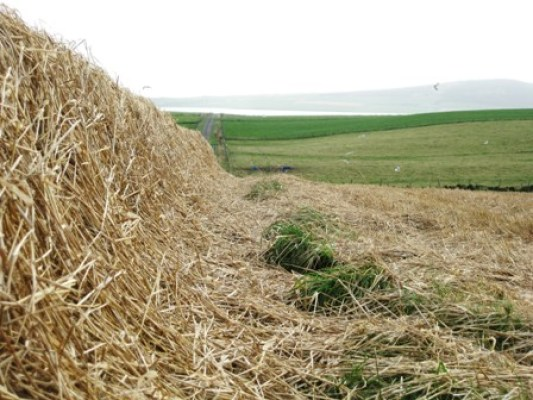 straw hedges