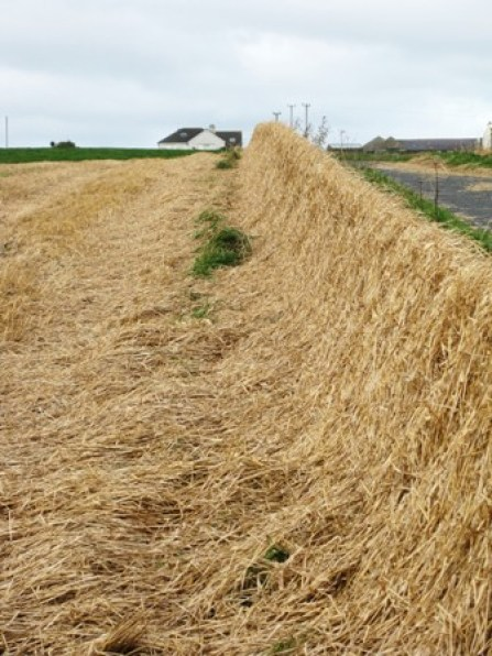 straw hedges Bell