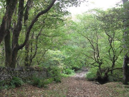 Binscarth Woods Autumn Credit Bell