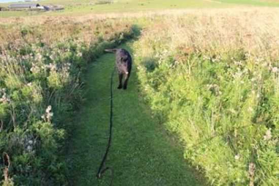 Holm sanctuary  dog rescue centre Loving Homes